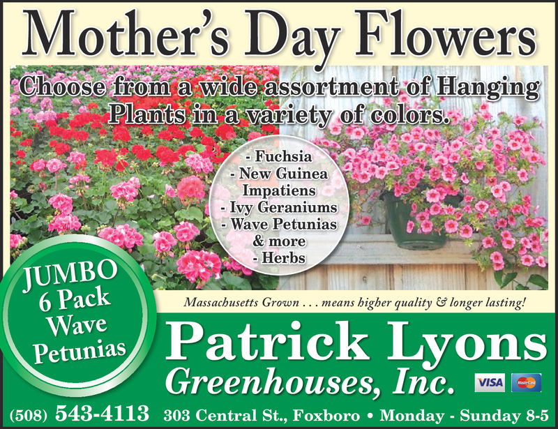 Mother's Day FlowersChoose from a wide assortment of HangingPlanits lun a Variety of colors»-Fuchsia- New GuineaImpatiensIvy GeraniumsWave Petunias& more-HerbsTUMBO6 PackWavePetuniasMassachusetts Grown . . . means higher qualitylonger lasting!Patrick LyonsGreenhouses, Inc.VISA(508) 543-4113 303 Central St., Foxboro Monday - Sunday 8-5 Mother's Day Flowers Choose from a wide assortment of Hanging Planits lun a Variety of colors» -Fuchsia - New Guinea Impatiens Ivy Geraniums Wave Petunias & more -Herbs TUMBO 6 Pack Wave Petunias Massachusetts Grown . . . means higher quality longer lasting ! Patrick Lyons Greenhouses, Inc. VISA (508) 543-4113 303 Central St., Foxboro Monday - Sunday 8-5