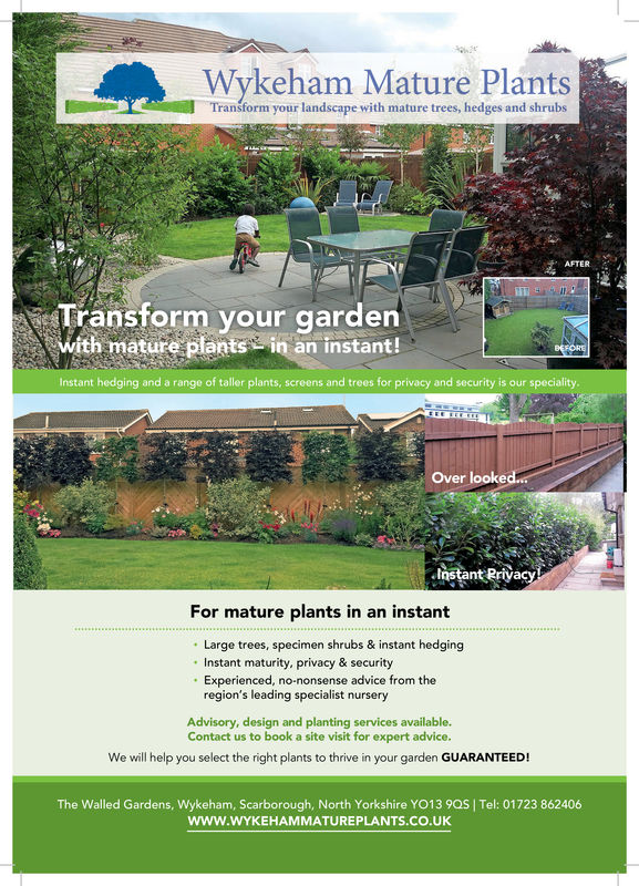 Wykeham Mature PlantsWykeham Mature Plantsform your landscape with mature trees, hedges and shrubsAFTERTransform your gardenith mature plantsin an instant!Instant hedging and a range of taller plants, screens and trees for privacy and security is our specialityOver lookeInstant RriyFor mature plants in an instantLarge trees, specimen shrubs & instant hedgingInstant maturity, privacy & securityExperienced, no-nonsense advice from theregion's leading specialist nurseryAdvisory, design and planting services available.Contact us to book a site visit for expert advice.We will help you select the right plants to thrive in your garden GUARANTEED!The Walled Gardens, Wykeham, Scarborough, North Yorkshire YO13 9QS I Tel: 01723 862406www.WYKEHAMMATUREPLANTS.CO.UK Wykeham Mature Plants Wykeham Mature Plants form your landscape with mature trees, hedges and shrubs AFTER Transform your garden ith mature plantsin an instant! Instant hedging and a range of taller plants, screens and trees for privacy and security is our speciality Over looke Instant Rriy For mature plants in an instant Large trees, specimen shrubs & instant hedging Instant maturity, privacy & security Experienced, no-nonsense advice from the region's leading specialist nursery Advisory, design and planting services available. Contact us to book a site visit for expert advice. We will help you select the right plants to thrive in your garden GUARANTEED! The Walled Gardens, Wykeham, Scarborough, North Yorkshire YO13 9QS I Tel: 01723 862406 www.WYKEHAMMATUREPLANTS.CO.UK