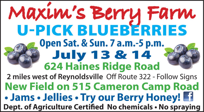 Maxim's Berry FarmU-PICK BLUEBERRIESOpen Sat. & Sun. 7 a.m.-5 p.m.July 13 & 14624 Haines Ridge Road2 miles west of Reynoldsville Off Route 322 - Follow SignsNew Field on 515 Cameron Camp RoadJams Jellies Try our Berry Honey! fDept. of Agriculture Certified No chemicals No spraying Maxim's Berry Farm U-PICK BLUEBERRIES Open Sat. & Sun. 7 a.m.-5 p.m. July 13 & 14 624 Haines Ridge Road 2 miles west of Reynoldsville Off Route 322 - Follow Signs New Field on 515 Cameron Camp Road Jams Jellies Try our Berry Honey! f Dept. of Agriculture Certified No chemicals No spraying