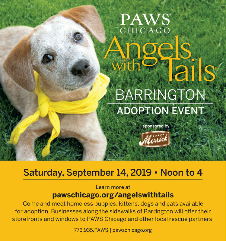 PAWSCHICAGOAngelsTailswithBARRINGTONADOPTION EVENTsponsored byMerrickSaturday, September 14, 2019Noon to 4Learn more atpawschicago.org/angelswithtailsCome and meet homeless puppies, kittens, dogs and cats availablefor adoption. Businesses along the sidewalks of Barrington will offer theirstorefronts and windows to PAWS Chicago and other local rescue partners.773.935.PAWS I pawschicago.org PAWS CHICAGO Angels Tails with BARRINGTON ADOPTION EVENT sponsored by Merrick Saturday, September 14, 2019 Noon to 4 Learn more at pawschicago.org/angelswithtails Come and meet homeless puppies, kittens, dogs and cats available for adoption. Businesses along the sidewalks of Barrington will offer their storefronts and windows to PAWS Chicago and other local rescue partners. 773.935.PAWS I pawschicago.org