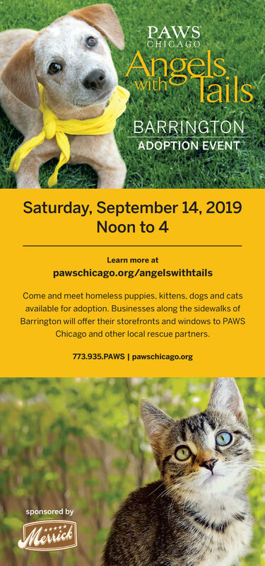 PAWSCHICAGOAngelsTailswithBARRINGTONADOPTION EVENTSaturday, September 14, 2019Noon to 4Learn more atpawschicago.org/angelswithtailsCome and meet homeless puppies, kittens, dogs and catsavailable for adoption. Businesses along the sidewalks ofBarrington will offer their storefronts and windows to PAWSChicago and other local rescue partners.773.935.PAWS I pawschicago.orgsponsored byMcisick PAWS CHICAGO Angels Tails with BARRINGTON ADOPTION EVENT Saturday, September 14, 2019 Noon to 4 Learn more at pawschicago.org/angelswithtails Come and meet homeless puppies, kittens, dogs and cats available for adoption. Businesses along the sidewalks of Barrington will offer their storefronts and windows to PAWS Chicago and other local rescue partners. 773.935.PAWS I pawschicago.org sponsored by Mcisick