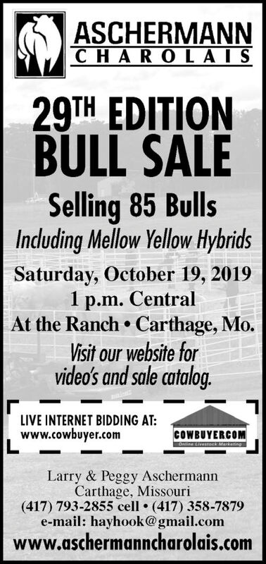 ASCHERMANNCHAROL AIS29TH EDITIONBULL SALESelling 85 BullsInduding Mellow Yellow HybridsSaturday, October 19, 20191 p.m. CentralAt the Ranch Carthage, Mo.Visit our website forvideo's and sale catalog.LIVE INTERNET BIDDING AT:www.cowbuyer.comCOWBUYERCOMOnline Livestoc MarketingLarry & Peggy AschermannCarthage, Missouri(417) 793-2855 cell (417) 358-7879e-mail: hayhook@gmail.comwww.aschermanncharolais.com ASCHERMANN CHAROL AIS 29TH EDITION BULL SALE Selling 85 Bulls Induding Mellow Yellow Hybrids Saturday, October 19, 2019 1 p.m. Central At the Ranch Carthage, Mo. Visit our website for video's and sale catalog. LIVE INTERNET BIDDING AT: www.cowbuyer.com COWBUYERCOM Online Livestoc Marketing Larry & Peggy Aschermann Carthage, Missouri (417) 793-2855 cell (417) 358-7879 e-mail: hayhook@gmail.com www.aschermanncharolais.com