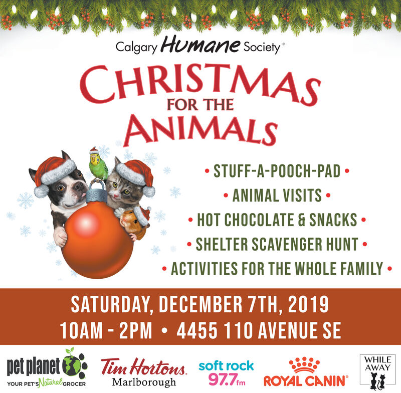 Calgary Humane SocietyCHRISTMASANIMALSFOR THESTUFF-A-POOCH-PADANIMAL VISITSHOT CHOCOLATE &SNACKSSHELTER SCAVENGER HUNTACTIVITIES FOR THE WHOLE FAMILYSATURDAY, DECEMBER 7TH, 201910AM-2PM 4455 110 AVENUE SEpet planetWHILEAWAYTim Hortons Soft rock97.7im ROYAL CANINMarlboroughYOUR PET'SNlral GROCER Calgary Humane Society CHRISTMAS ANIMALS FOR THE STUFF-A-POOCH-PAD ANIMAL VISITS HOT CHOCOLATE &SNACKS SHELTER SCAVENGER HUNT ACTIVITIES FOR THE WHOLE FAMILY SATURDAY, DECEMBER 7TH, 2019 10AM-2PM 4455 110 AVENUE SE pet planet WHILE AWAY Tim Hortons Soft rock 97.7im ROYAL CANIN Marlborough YOUR PET'SNlral GROCER
