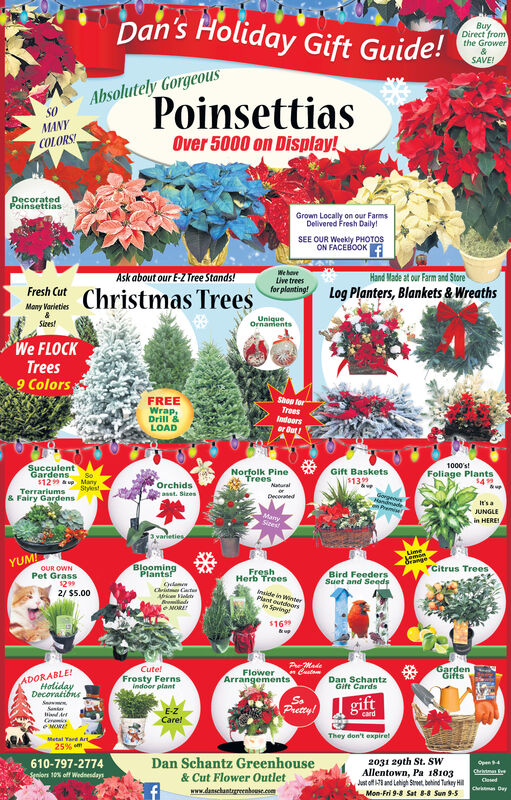 Dan's Holiday Gift Guide!BuyDirect fromthe GrowerSAVE!Absolutely GorgeousPoinsettiasSOMANYOver 5000 on Display!COLORS!DecoratedPoinsettiasGrown Locally on our FarmsDelivered Fresh Daily!SEE OUR Weekly PHOTOSON FACEBOOKWe haveLive treesfor planting!Ask about our E-Z Tree Stands!Hand Made at our Farm and StoreLog Planters, Blankets & WreathsFresh CutChristmas TreesMany VarietiesUniqueOrnamentsSizes!We FLOCKTrees9 ColorsShop forFREETreesIodoorsor ButWrap,Drill &LOAD1000's!SucculentGardensNorfolk PineTreesGift Baskets$139Foliage PlantsSo$129 up ManyOrchidsasst. SizesNaturalStylestTerrariumsor& Fairy GardensDecoteden PremieIt's aJUNGLEin HEREIMamySizest3varietiesGrangeYCitrus TreesYUMIBloomingPlants!OUR OWNPet Grass12992/ $5.00FreshHerb Treesnside in WinnerPlant outdoosin SpringBird FeedersSuet and SeedsClamCrit CactAbceniltyBroiad$169&upAMadeCute!GardenGiftsADORABLE!HolidayDecoratibnsFlowerArrangementsFrosty FernsIndoor plantDan SchantzGift CardsgiftPrettylSuneind ArtCeemeOMOREE-ZCare!cardThey don't expiretMetal Yard Art25% mDan Schantz Greenhouse2031 29th St. SWAllentown, Pa 18103Jatof i and Lahigh Stret betind Turkey HiMon-Fri 9-8 Sat 8-8 Sun 9-5610-797-2774OpenChritmanSeniors 10% off Wednesdays& Cut Flower OutletClosedCrmas Daywww.danschantrgreenboese.com Dan's Holiday Gift Guide! Buy Direct from the Grower SAVE! Absolutely Gorgeous Poinsettias SO MANY Over 5000 on Display! COLORS! Decorated Poinsettias Grown Locally on our Farms Delivered Fresh Daily! SEE OUR Weekly PHOTOS ON FACEBOOK We have Live trees for planting! Ask about our E-Z Tree Stands! Hand Made at our Farm and Store Log Planters, Blankets & Wreaths Fresh Cut Christmas Trees Many Varieties Unique Ornaments Sizes! We FLOCK Trees 9 Colors Shop for FREE Trees Iodoors or But Wrap, Drill & LOAD 1000's! Succulent Gardens Norfolk Pine Trees Gift Baskets $139 Foliage Plants So $129 up Many Orchids asst. Sizes Natural Stylest Terrariums or & Fairy Gardens Decoted en Premie It's a JUNGLE in HEREI Mamy Sizest 3vari