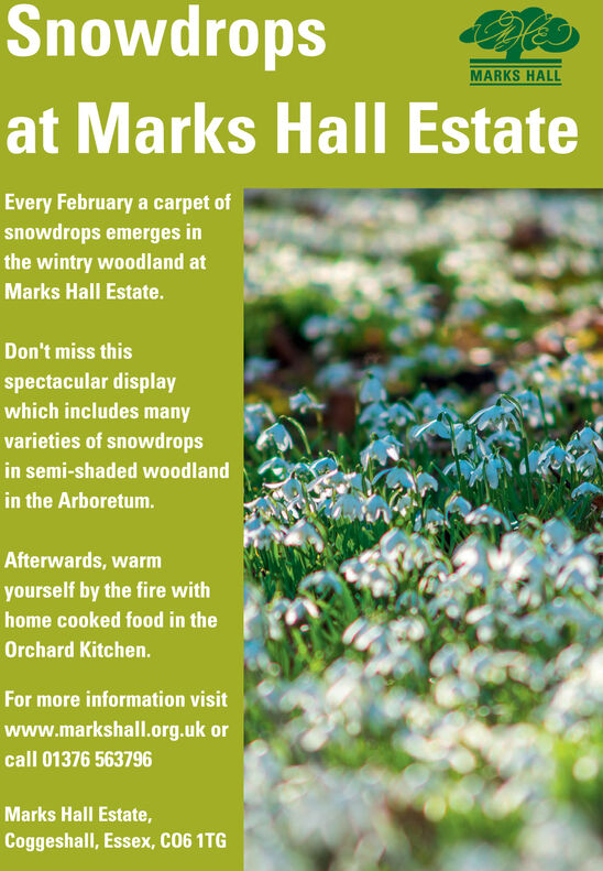 SnowdropsMARKS HALLat Marks Hall EstateEvery February a carpet ofsnowdrops emerges inthe wintry woodland atMarks Hall Estate.Don't miss thisspectacular displaywhich includes manyvarieties of snowdropsin semi-shaded woodlandin the Arboretum.Afterwards, warmyourself by the fire withhome cooked food in theOrchard Kitchen.For more information visitwww.markshall.org.uk orcall 01376 563796Marks Hall Estate,Coggeshall, Essex, C06 1TG Snowdrops MARKS HALL at Marks Hall Estate Every February a carpet of snowdrops emerges in the wintry woodland at Marks Hall Estate. Don't miss this spectacular display which includes many varieties of snowdrops in semi-shaded woodland in the Arboretum. Afterwards, warm yourself by the fire with home cooked food in the Orchard Kitchen. For more information visit www.markshall.org.uk or call 01376 563796 Marks Hall Estate, Coggeshall, Essex, C06 1TG