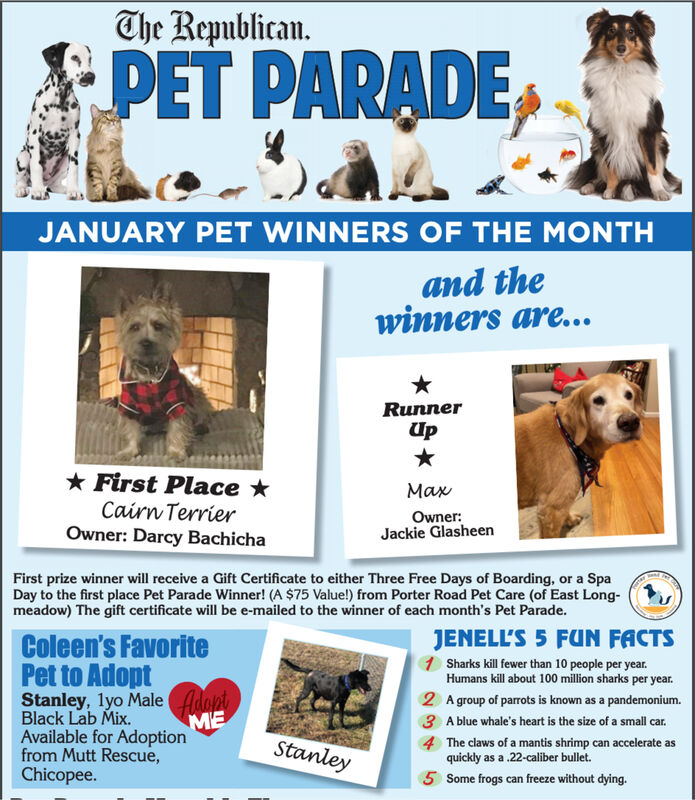 The Republican.PET PARADEJANUARY PET WINNERS OF THE MONTHand thewinners are...RunnerUp* First Place *Cairn TerrierOwner: Darcy BachichaMaxOwner:Jackie GlasheenFirst prize winner will receive a Gift Certificate to either Three Free Days of Boarding, or a SpaDay to the first place Pet Parade Winner! (A $75 Value!) from Porter Road Pet Care (of East Long-meadow) The gift certificate will be e-mailed to the winner of each month's Pet Parade.JENELL'S 5 FUN FACTS1 Sharks kill fewer than 10 people per year.Humans kill about 100 million sharks per year.Coleen's FavoritePet to AdoptStanley, lyo Male AdontBlack Lab Mix.Available for Adoptionfrom Mutt Rescue,Chicopee.2 A group of parrots is known as a pandemonium.3 A blue whale's heart is the size of a small car.4The claws of a mantis shrimp can accelerate asquickly as a .22-caliber bullet.5 Some frogs can freeze without dying.Stanley The Republican. PET PARADE JANUARY PET WINNERS OF THE MONTH and the winners are... Runner Up * First Place * Cairn Terrier Owner: Darcy Bachicha Max Owner: Jackie Glasheen First prize winner will receive a Gift Certificate to either Three Free Days of Boarding, or a Spa Day to the first place Pet Parade Winner! (A $75 Value!) from Porter Road Pet Care (of East Long- meadow) The gift certificate will be e-mailed to the winner of each month's Pet Parade. JENELL'S 5 FUN FACTS 1 Sharks kill fewer than 10 people per year. Humans kill about 100 million sharks per year. Coleen's Favorite Pet to Adopt Stanley, lyo Male Adont Black Lab Mix. Available for Adoption from Mutt Rescue, Chicopee. 2 A group of parrots is known as a pandemonium. 3 A blue whale's heart is the size of a small car. 4 The claws of a mantis shrimp can accelerate as quickly as a .22-caliber bullet. 5 Some frogs can freeze without dying. Stanley