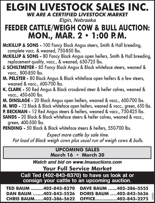 ELGIN LIVESTOCK SALES INC.WE ARE A CERTIFIED LIVESTOCK MARKETElgin, NebraskaFEEDER CATTLE/WEIGH COW & BULL AUCTION:MON., MAR. 2 1:00 P.M.MCKILLIP & SONS - 100 Fancy Black Angus steers, Smith & Hall breeding,complete vacc. & weaned, 750-850 Ibs.MCKILLIP & SONS - 80 Fancy Black Angus open heifers, Smith & Hall breeding,replacement quality, vacc., & weaned, 650-725 lbs.J. SCHILTMEYER - 85 Fancy Black Angus & Black whiteface steers, weaned &vac., 800-850 lbs.M. PELSTER - 80 Black Angus & Black whiteface open heifers & a few steers,weaned & vacc., 600-700 lbs.K. CLARK - 50 Red Angus & Black crossbred steer & heifer calves, weaned &vac., 450-600 lbs.M. DINSLAGE - 20 Black Angus open heifers, weaned & vacc., 600-700 lbs.M. WID - 12 Black & Black whiteface open heifers, weaned & vacc., green, 650 Ibs.P. BECKMAN - 12 Red Angus steers & heifers, weaned & vacc., 750-825 lbs.SANDS - 20 Black & Black whiteface steers & heifer calves, weaned & vacc.,green, 400-500 lbs.PENDING - 50 Black & Black whiteface steers & heifers, 550-700 lbs.Expect more cattle by sale time.Pot load of Black weigh cows plus usual run of weigh cows & bulls.UPCOMING SALESMarch 16  March 30Watch and bid on www.Imaauctions.comYour Full Service MarketCall Ted (402-843-8370) to have us look at orconsign your cattle to an upcoming auction.TED BAUM .. .402-843-8370 DAVE BAUM ...402-386-5555DAN BAUM ...402-843-5526 DORIS BAUM ....402-843-5636CHRIS BAUM....402-386-5622 OFFICE... .402-843-2275151071 ELGIN LIVESTOCK SALES INC. WE ARE A CERTIFIED LIVESTOCK MARKET Elgin, Nebraska FEEDER CATTLE/WEIGH COW & BULL AUCTION: MON., MAR. 2 1:00 P.M. MCKILLIP & SONS - 100 Fancy Black Angus steers, Smith & Hall breeding, complete vacc. & weaned, 750-850 Ibs. MCKILLIP & SONS - 80 Fancy Black Angus open heifers, Smith & Hall breeding, replacement quality, vacc., & weaned, 650-725 lbs. J. SCHILTMEYER - 85 Fancy Black Angus & Black whiteface steers, weaned & vac., 800-850 lbs. M. PELSTER - 80 Black Angus & Black whiteface open heife