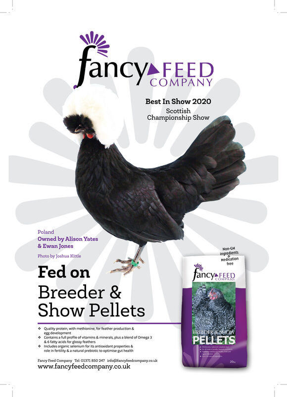 fancy FEEDCOMPANYBest In Show 2020ScottishChampionship ShowPolandOwned by Alison Yates& Ewan JonesNon-GHingredientsMedicationfreePhoto by Joshua KittleFed onBreeder &Show Pelletsfancy FEEDCOMPANY Quality protein, with methionine, for feather production &egg development Contains a full profile of vitamins & minerals, plus a blend of Omega 3&6 fatty acids for glossy feathers* Includes organic selenium for its antioxidant properties &role in fertility & a natural prebiotic to optimise gut healthBREEDERSSOWPELLETSFaney Feed Company Tel: 01371 850 247 info@tancyfeedcomparny.co.ukwww.fancyfeedcompany.co.uk20 fancy FEED COMPANY Best In Show 2020 Scottish Championship Show Poland Owned by Alison Yates & Ewan Jones Non-GH ingredients Medication free Photo by Joshua Kittle Fed on Breeder & Show Pellets fancy FEED COMPANY  Quality protein, with methionine, for feather production & egg development  Contains a full profile of vitamins & minerals, plus a blend of Omega 3 &6 fatty acids for glossy feathers * Includes organic selenium for its antioxidant properties & role in fertility & a natural prebiotic to optimise gut health BREEDERSSOW PELLETS Faney Feed Company Tel: 01371 850 247 info@tancyfeedcomparny.co.uk www.fancyfeedcompany.co.uk 20