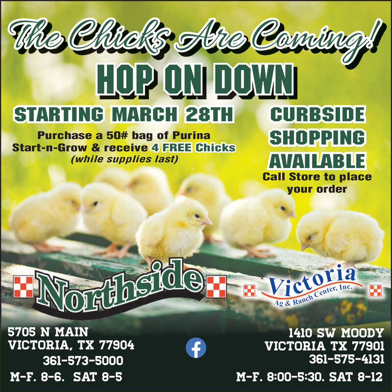 The Chicks Ae Caning!HOP ON DOWNSTARTING MARCH 28THCURBSIDESHOPPINGPurchase a 50# bag of PurinaStart-n-Grow & receive 4 FREE Chicks(while supplies last)AVAILABLECall Store to placeyour orderNorthsideVictoriaAg & Ranch Center, Inc.5705 N MAIN1410 SW MOODYVICTORIA TX 77901VICTORIA, TX 77904361-573-5000361-575-4131M-F. 8-6. SAT 8-5M-F. 8:00-5:30. SAT 8-12 The Chicks Ae Caning! HOP ON DOWN STARTING MARCH 28TH CURBSIDE SHOPPING Purchase a 50# bag of Purina Start-n-Grow & receive 4 FREE Chicks (while supplies last) AVAILABLE Call Store to place your order Northside Victoria Ag & Ranch Center, Inc. 5705 N MAIN 1410 SW MOODY VICTORIA TX 77901 VICTORIA, TX 77904 361-573-5000 361-575-4131 M-F. 8-6. SAT 8-5 M-F. 8:00-5:30. SAT 8-12