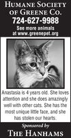 HUMANE SOCIETYOF GREENE Co.724-627-9988See more animalsat www.greenepet.orgAnastasia is 4 years old. She lovesattention and she does amazinglywell with other cats. She has themost unique little face, and shehas stolen our hearts.Sponsored byTHE HANHAMS HUMANE SOCIETY OF GREENE Co. 724-627-9988 See more animals at www.greenepet.org Anastasia is 4 years old. She loves attention and she does amazingly well with other cats. She has the most unique little face, and she has stolen our hearts. Sponsored by THE HANHAMS