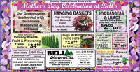 Growing Quality Plants Since 1935Mother's Day Celebration at Bell'sHANGING BAKETSHYDRANGEASOur Greenhousesare loaded withGeraniums,Mandevilla &HibiscusHuge Burstingwith Blooms && LILACSSome in Bud & BloomBlue, Pink, Red or WhiteColor!$200.$20°OFFA Family Traditionfor MOM!only with this adGreat Solection ofPrivacy Plants,Fruit & FloweringHuge MIXED!PATIO POTSSTART A HERBGARDENBuy 4 pots,Get 1HardyEVERGREENAZALEASIn Bud & Bloom$1999Starting at 3499Large Selection ofWind ChimeswithReg. $24.99 this adFREE!$200 OFFwith this adVISIT OURGift Shop BELLMA (203) 248-5086 SOLOCS PaversHouse Plants &SucculentsWe're paving a whole new way.& Decorative Potsfeaturing GardenAccents1301 Hartford Tpke.North Haven, CTNurseries, inc.DUE TO COVID-19,Between Rt. 22 &Dixwell Ave.5 GENERATIONS OF GROWINGQUALITY LANDSCAPE &GARDEN CENTERSince 1935$299WE ARE IMPLEMENTINGStarting atSPRING HOURS:CDC GUIDELINES FORMon.-Sat. 8-5: Sun.9-4YOUR SAFETYSpecials Good thru May 13, 2020 - While Supplies LastDuring Pandemic, Store Hours are:Mon-Sat 8-5, Sun 9-4 Growing Quality Plants Since 1935 Mother's Day Celebration at Bell's HANGING BAKETS HYDRANGEAS Our Greenhouses are loaded with Geraniums, Mandevilla & Hibiscus Huge Bursting with Blooms & & LILACS Some in Bud & Bloom Blue, Pink, Red or White Color! $200. $20°OFF A Family Tradition for MOM! only with this ad Great Solection of Privacy Plants, Fruit & Flowering Huge MIXED! PATIO POTS START A HERB GARDEN Buy 4 pots, Get 1 Hardy EVERGREEN AZALEAS In Bud & Bloom $1999 Starting at 3499 Large Selection of Wind Chimes with Reg. $24.99 this ad FREE! $200 OFF with this ad VISIT OUR Gift Shop BELLMA (203) 248-5086 SOLOCS Pavers House Plants & Succulents We're paving a whole new way. & Decorative Pots featuring Garden Accents 1301 Hartford Tpke. North Haven, CT Nurseries, inc. DUE TO COVID-19, Between Rt. 22 & Dixwell Ave. 5 GENERATIONS OF GROWING QUALITY LANDSCAPE & GARDEN CENTER Since 1935 $299 WE ARE IMPLEMENTING Starting at SPRING HOURS: CDC GUIDELINES FOR