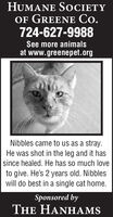 HUMANE SOCIETYOF GREENE Co.724-627-9988See more animalsat www.greenepet.orgNibbles came to us as a stray.He was shot in the leg and it hassince healed. He has so much loveto give. He's 2 years old. Nibbleswill do best in a single cat home.Sponsored byTHE HANHAMS HUMANE SOCIETY OF GREENE Co. 724-627-9988 See more animals at www.greenepet.org Nibbles came to us as a stray. He was shot in the leg and it has since healed. He has so much love to give. He's 2 years old. Nibbles will do best in a single cat home. Sponsored by THE HANHAMS