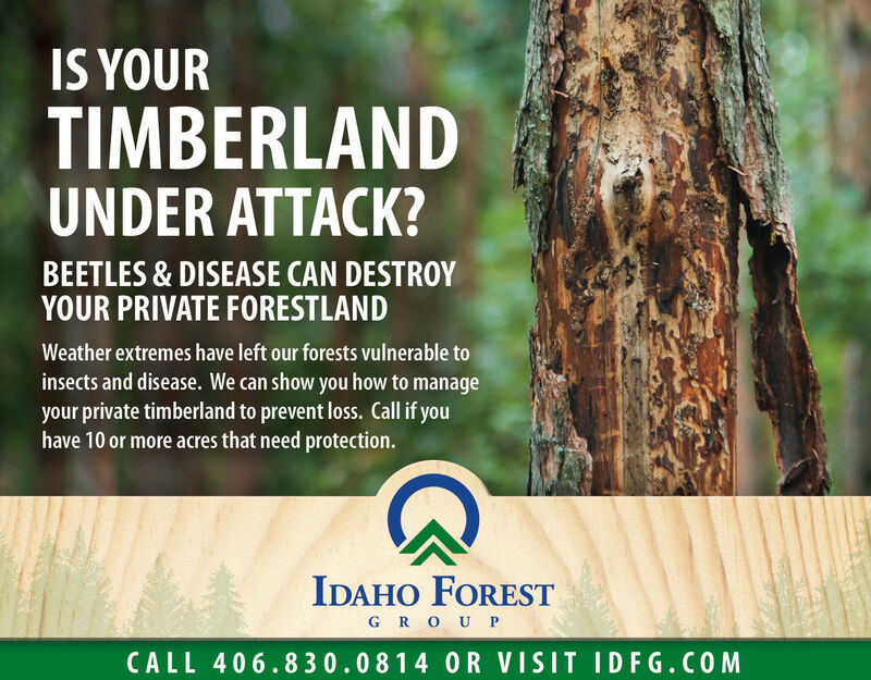 IS YOURTIMBERLANDUNDER ATTACK?BEETLES & DISEASE CAN DESTROYYOUR PRIVATE FORESTLANDWeather extremes have left our forests vulnerable toinsects and disease. We can show you how to manageyour private timberland to prevent loss. Call if youhave 10 or more acres that need protection.IDAHO FORESTG ROU PCALL 406.830.0814 0R VISIT IDFG.COM IS YOUR TIMBERLAND UNDER ATTACK? BEETLES & DISEASE CAN DESTROY YOUR PRIVATE FORESTLAND Weather extremes have left our forests vulnerable to insects and disease. We can show you how to manage your private timberland to prevent loss. Call if you have 10 or more acres that need protection. IDAHO FOREST G ROU P CALL 406.830.0814 0R VISIT IDFG.COM