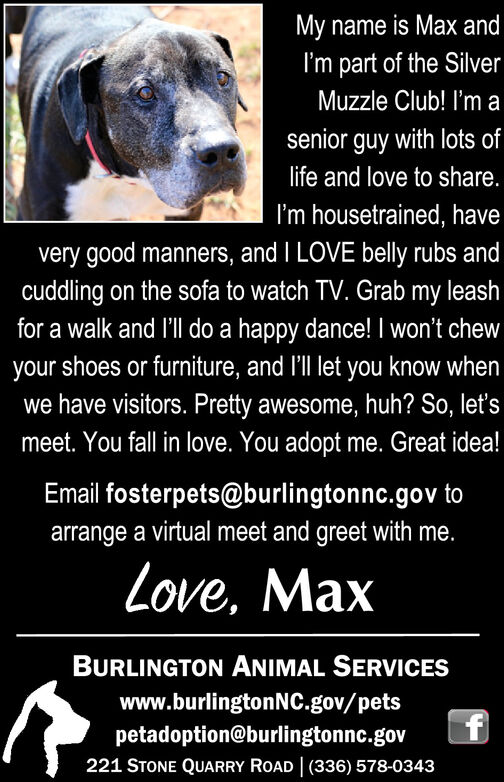 My name is Max andI'm part of the SilverMuzzle Club! I'm asenior guy with lots oflife and love to share.I'm housetrained, havevery good manners, and I LOVE belly rubs andcuddling on the sofa to watch TV. Grab my leashfor a walk and l'll do a happy dance! I won't chewyour shoes or furniture, and l'll let you know whenwe have visitors. Pretty awesome, huh? So, let'smeet. You fall in love. You adopt me. Great idea!Email fosterpets@burlingtonnc.gov toarrange a virtual meet and greet with me.Love, MaxBURLINGTON ANIMAL SERVICESwww.burlingtonNC.gov/petspetadoption@burlingtonnc.govf221 STONE QUARRY ROAD | (336) 578-0343 My name is Max and I'm part of the Silver Muzzle Club! I'm a senior guy with lots of life and love to share. I'm housetrained, have very good manners, and I LOVE belly rubs and cuddling on the sofa to watch TV. Grab my leash for a walk and l'll do a happy dance! I won't chew your shoes or furniture, and l'll let you know when we have visitors. Pretty awesome, huh? So, let's meet. You fall in love. You adopt me. Great idea! Email fosterpets@burlingtonnc.gov to arrange a virtual meet and greet with me. Love, Max BURLINGTON ANIMAL SERVICES www.burlingtonNC.gov/pets petadoption@burlingtonnc.gov f 221 STONE QUARRY ROAD | (336) 578-0343