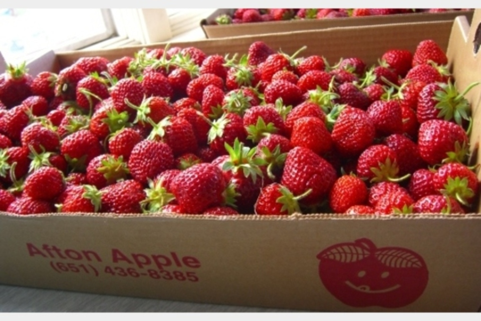 Afton Apple Orchard - Agriculture - Agriculture Production in Hastings MN