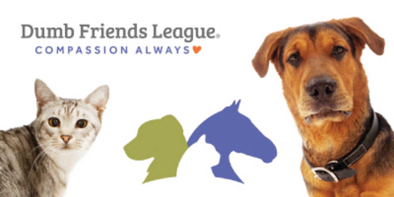 Dumb Friends League - Philanthropy - Non-Profit Organizations in Denver CO