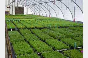 Bedner's Farm & Greenhouse in McDonald, PA