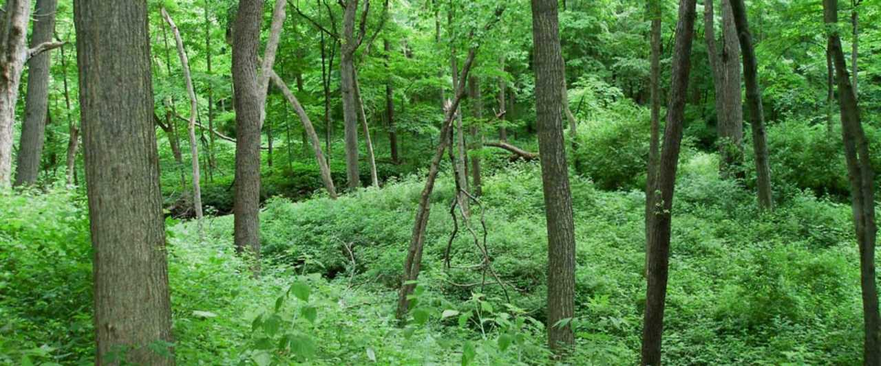 Kendall County Forest Preserve - Recreation - Parks in Yorkville IL
