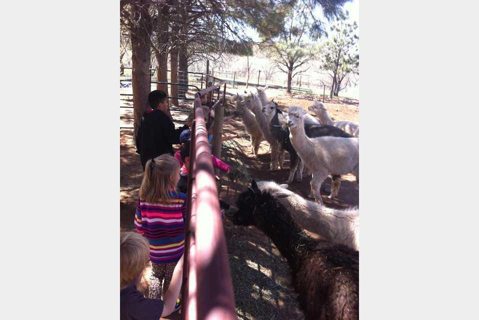 Zippity Zoo Barnyard - Recreation - Botanical Gardens and Zoos in Loveland CO