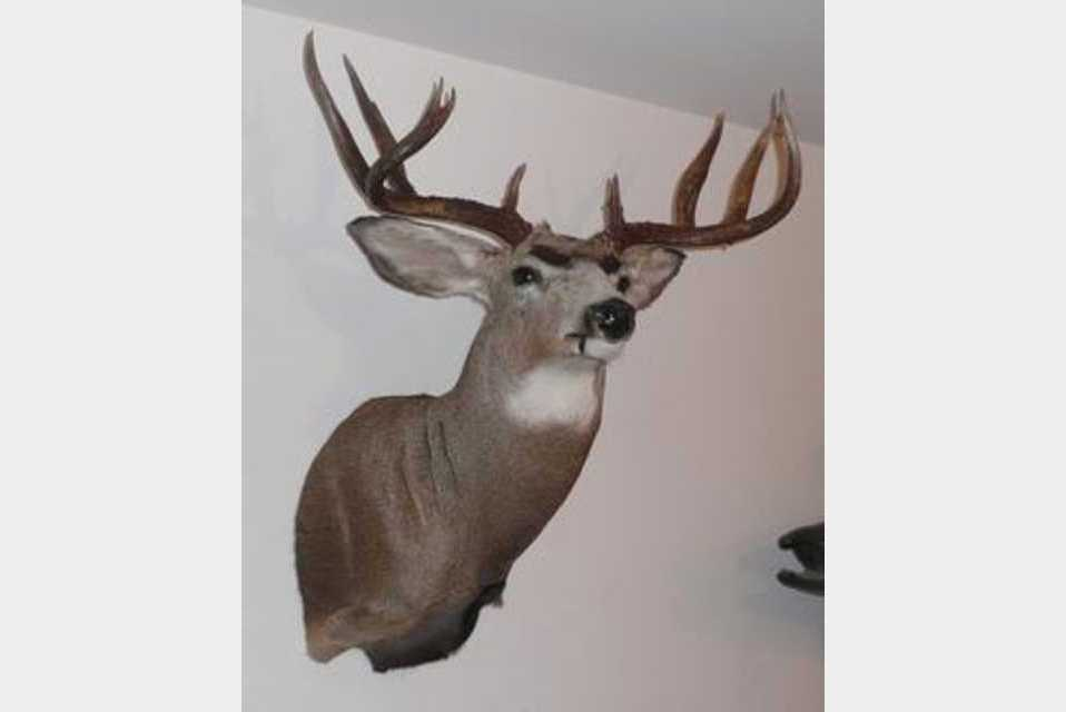 Treasure Valley Taxidermy - Services - Hobbies and Crafts in Nampa ID
