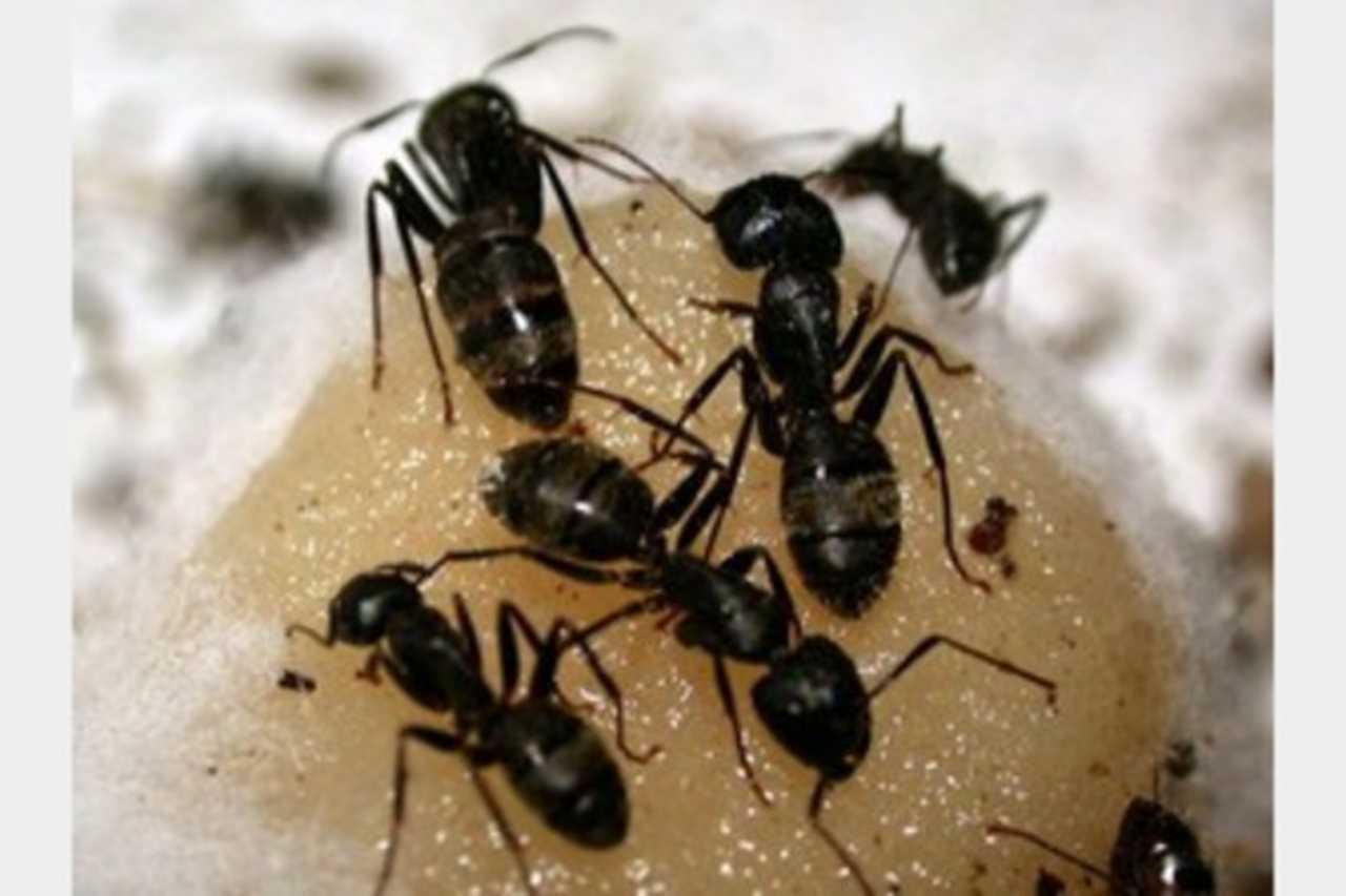 All Pest Pros - Services - Pest Control Services in Santa Clarita CA