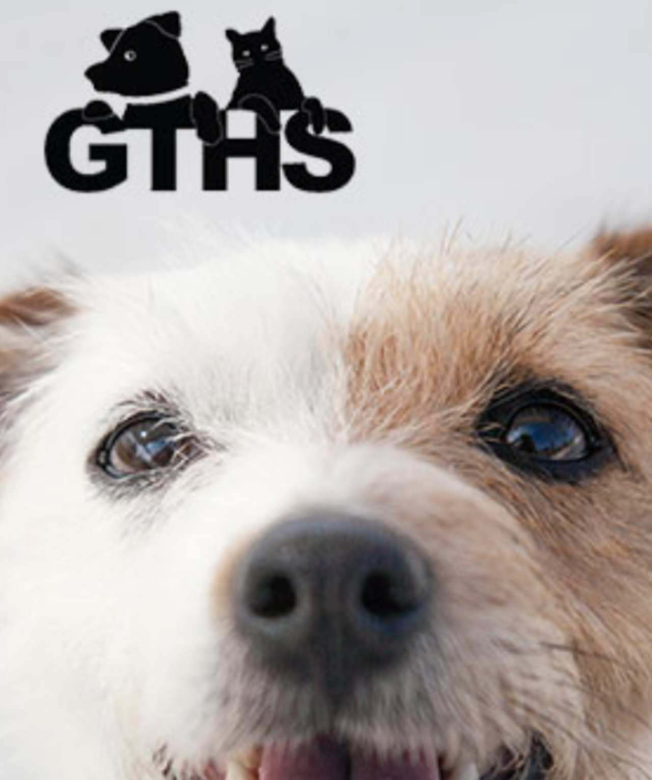 Georgian Triangle Humane Society - Pets and Animals - Essential Business in Collingwood ON