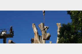 Aussie Tree Solutions in Arana Hills, QLD