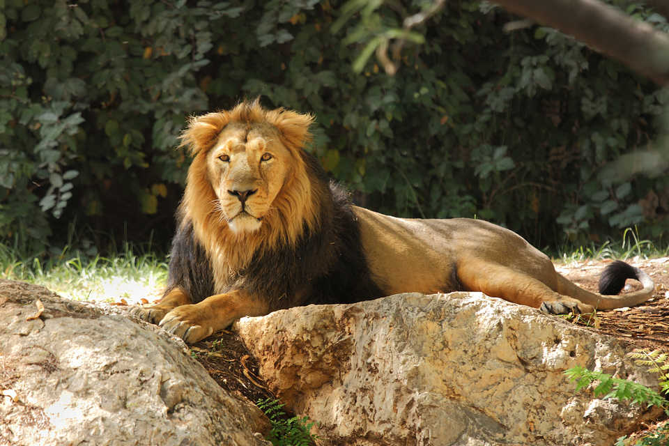 African Lion Safari - Travel - Travel Tours in Hamilton ON