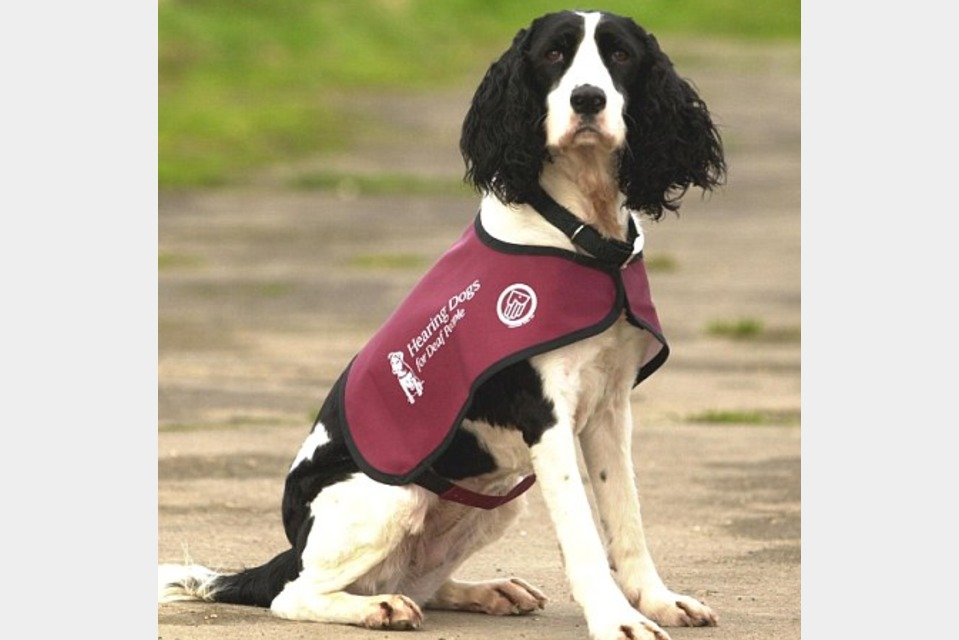 Hearing Dogs for Deaf People - Communication - Other in Princes Risborough