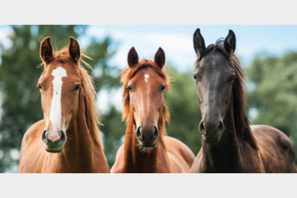 Dumb Friends League - Harmony Equine Center - Arts and Entertainment - Event in Franktown CO