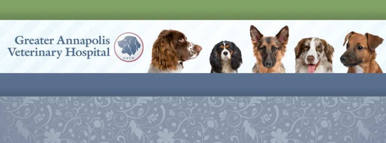 Greater Annapolis Veterinary Hospital - Pets and Animals - Veterinary Clinics in Annapolis MD
