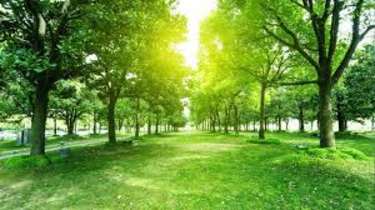 Cape City County Tree Service - Services - Landscaping in Cape Girardeau MO