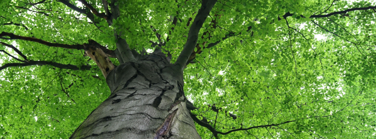 All About Trees - Services - Landscaping in Farmington MO