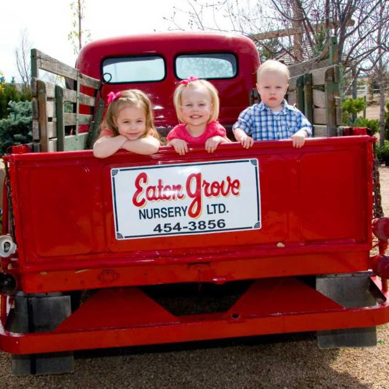 Eaton Grove Garden Center Nursery - Agriculture - Greenhouses in Eaton CO