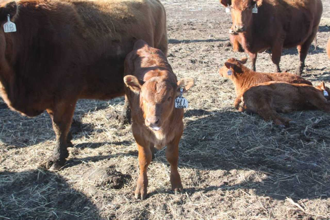 Lazy J Bar Ranch - Agriculture - Livestock in Mina SD